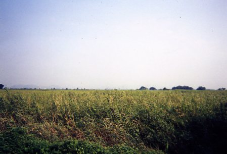 yanakamura189.jpg